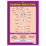 HUMAN SKELETON POSTER SET PK3