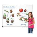 MAGNETIC PLANT LIFE CYCLE