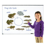 Magnetic Frog Life Cycle