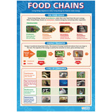 FOOD CHAIN/FOOD CYCLE POSTER PK2